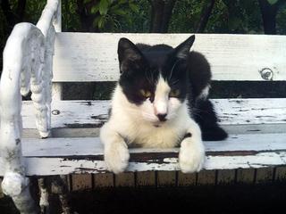 男爵君のお気に入りのベンチ